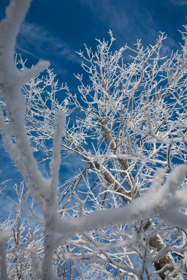 Mount Moose Branches