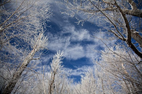 Moose Mountain Trees, Sky