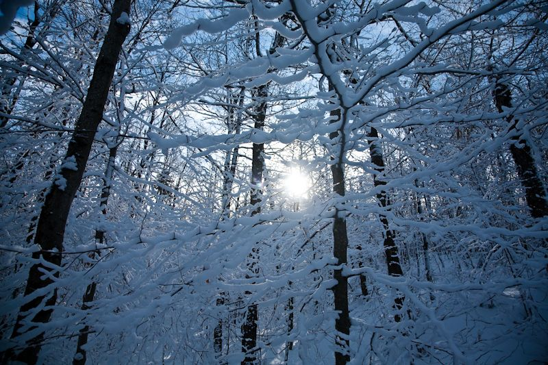 Winter Forest by Harris Cabin, Sunset