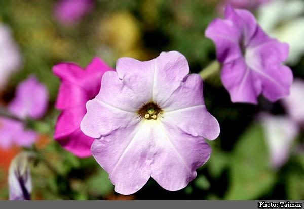Flower (8)