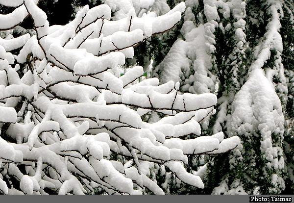 Snow (2)