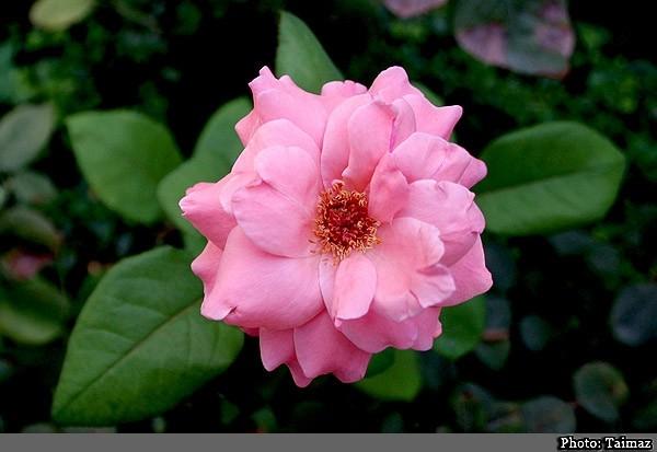 Flower (12)