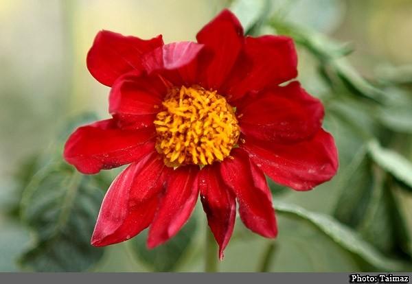 Flower (16)
