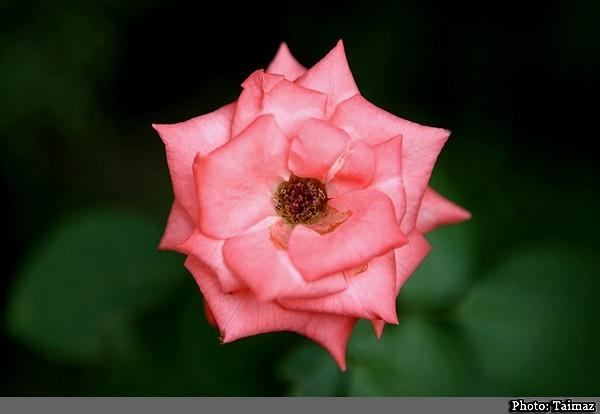 Flower (19)