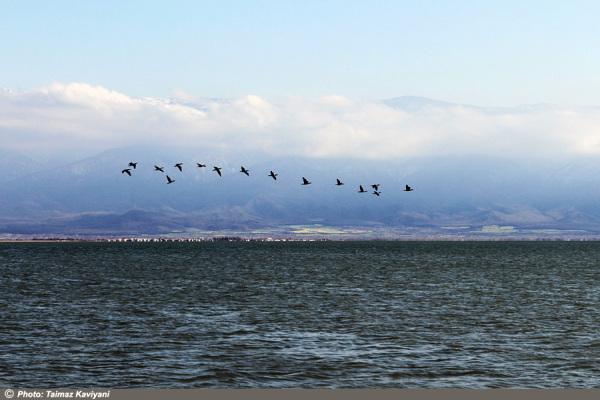 Sea & Birds
