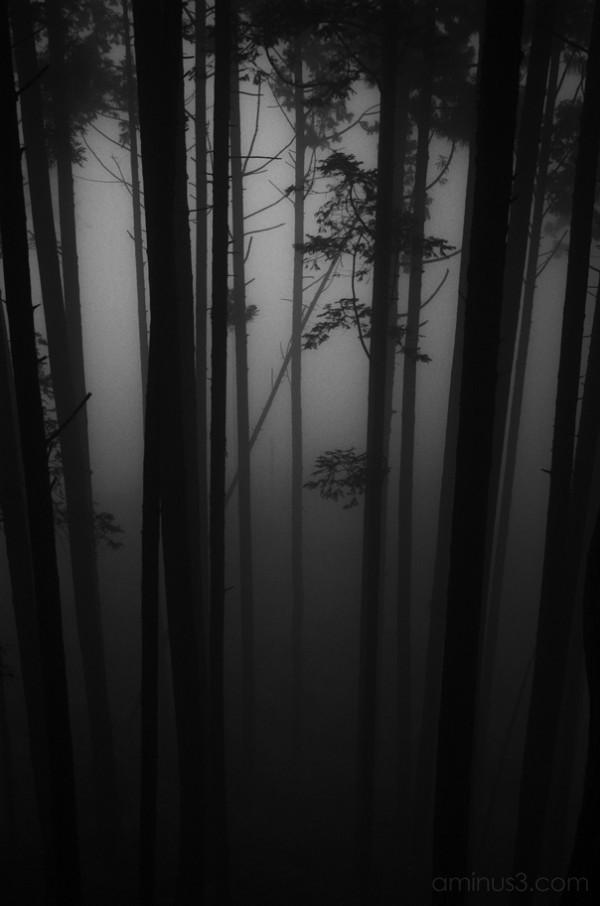 mt sougaku, trees, john cleary