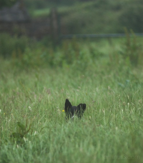 in the long grass ..