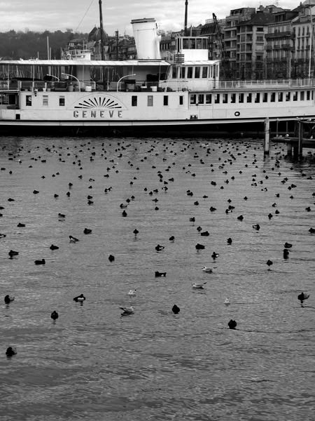 water lake birds boat geneva