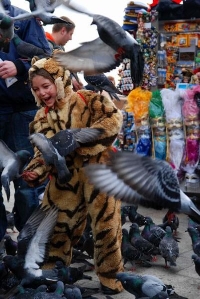 kid venice carnival pigeon costume