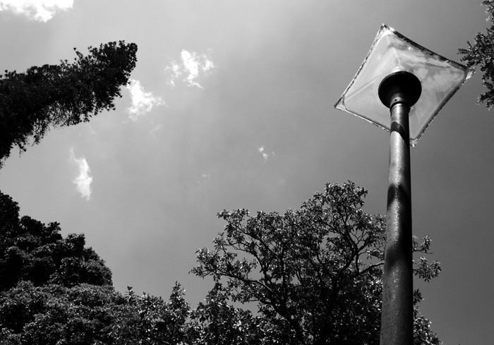 tree sky lisbon