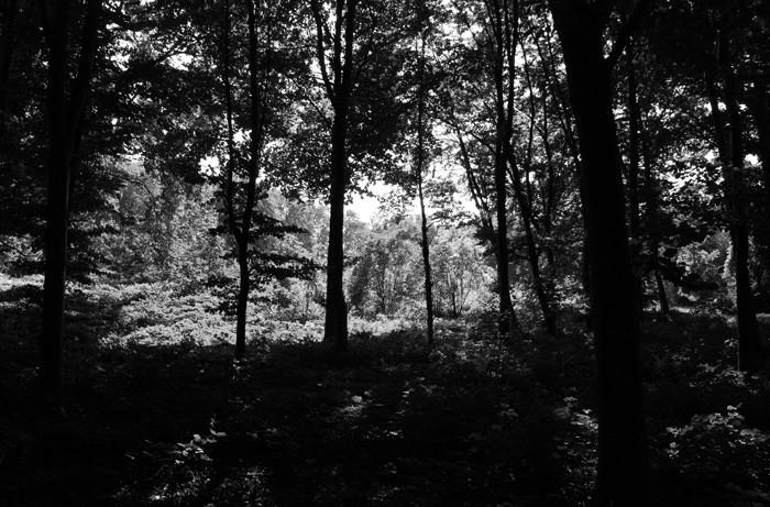 home nature tree