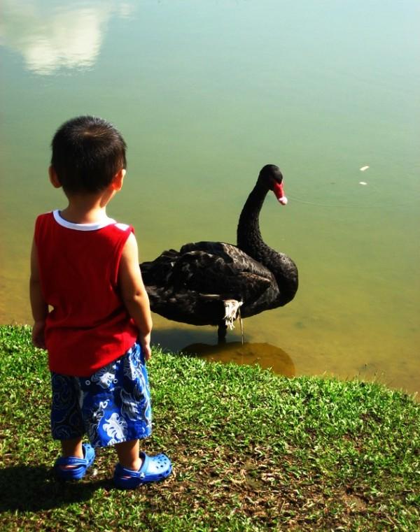 Duck Duck