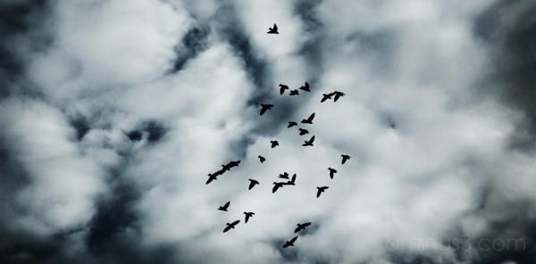 More Birds, More Luck