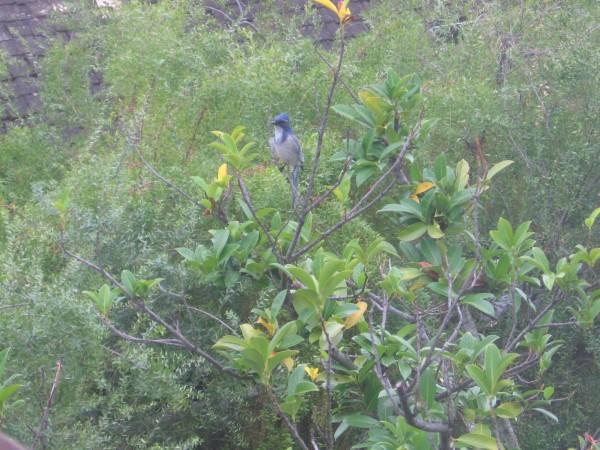 bird in my window