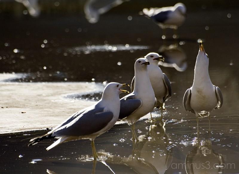 Symphony of seagulls