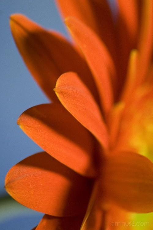 orange_blue