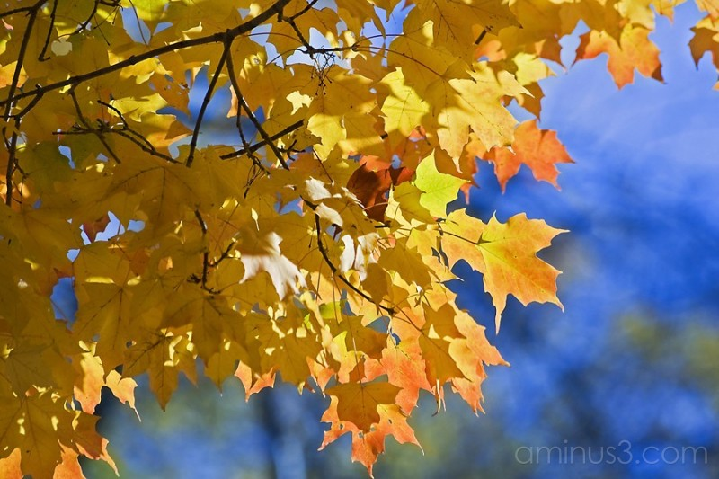 Fall colors_11