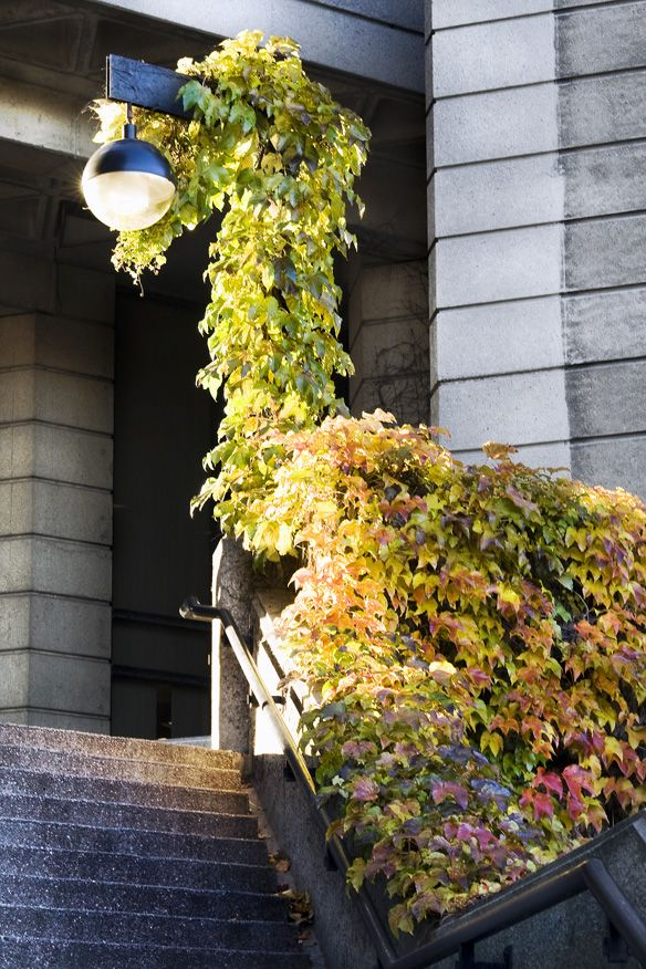 color_leaves_robarts