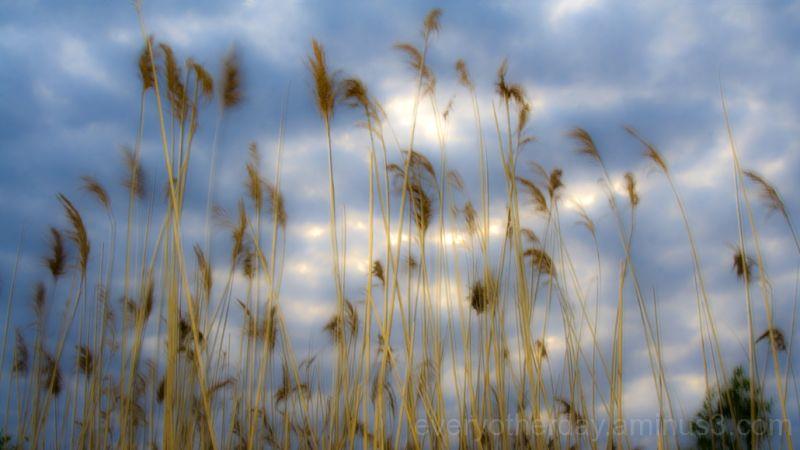 blow_wind_weightless