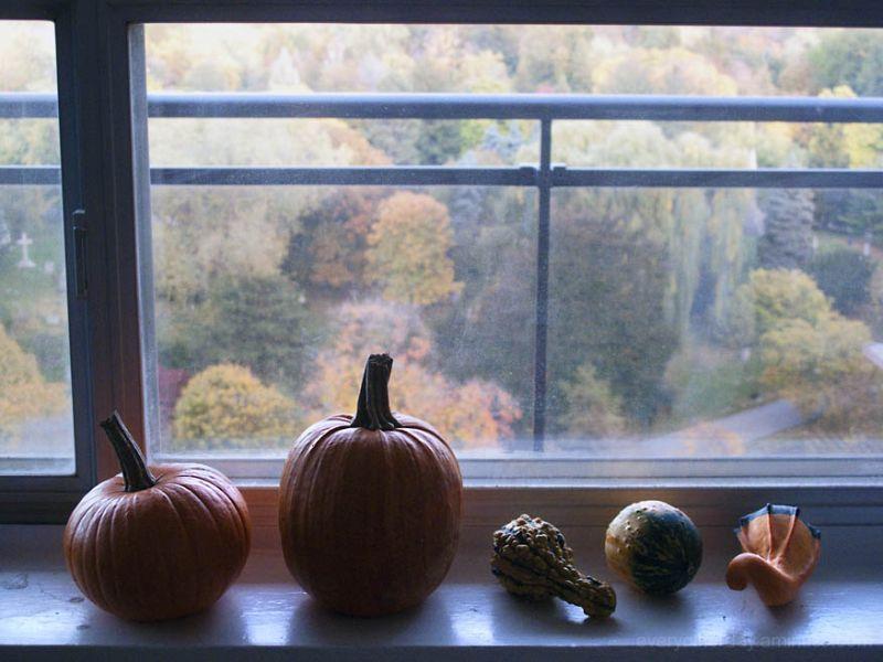 taste_fall_color