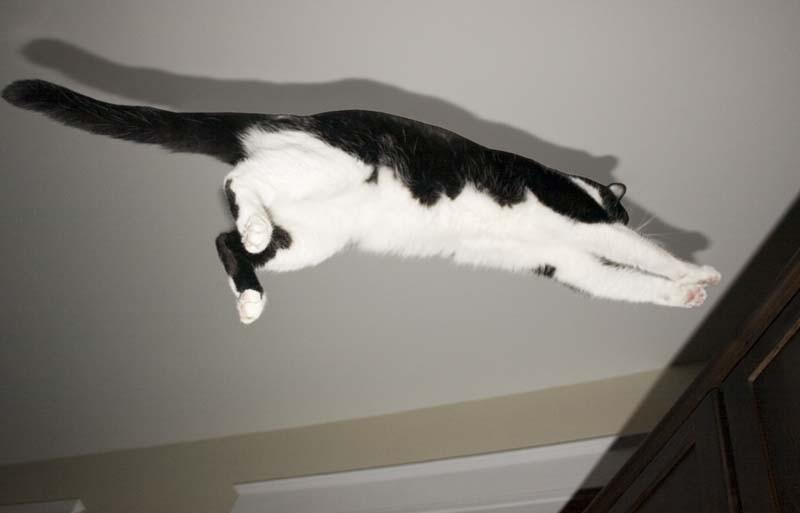 Parker flying