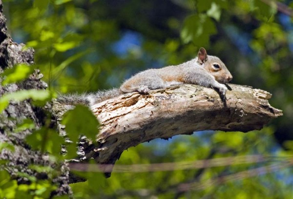 Squirrel resting on a branch