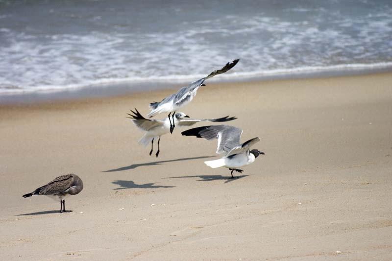 Birds on the beach