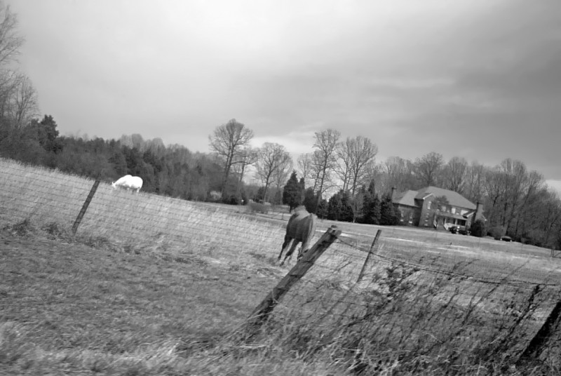 Horses and fence