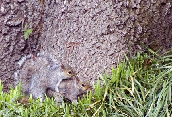 Where do squirrels come from?