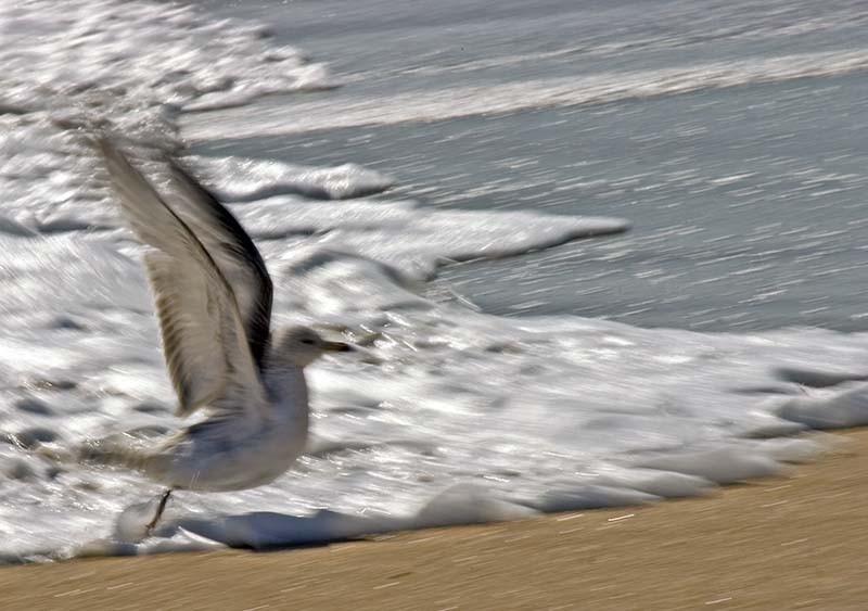 A bird escaping the surf