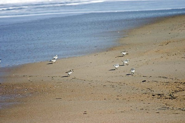 Birds on the beach revisited