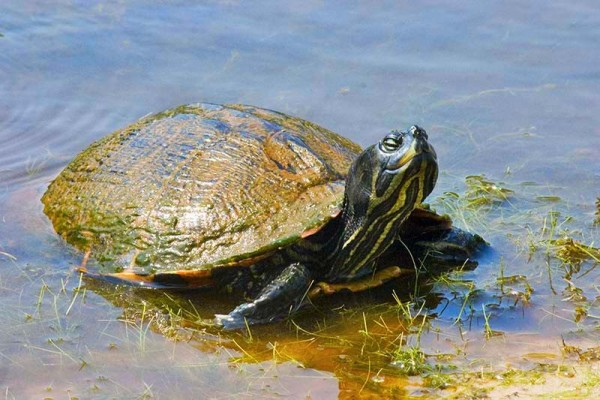 Meet Mr. Turtle