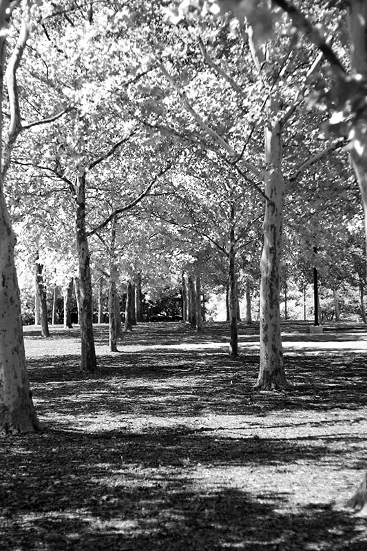 Trees on Brown's Island