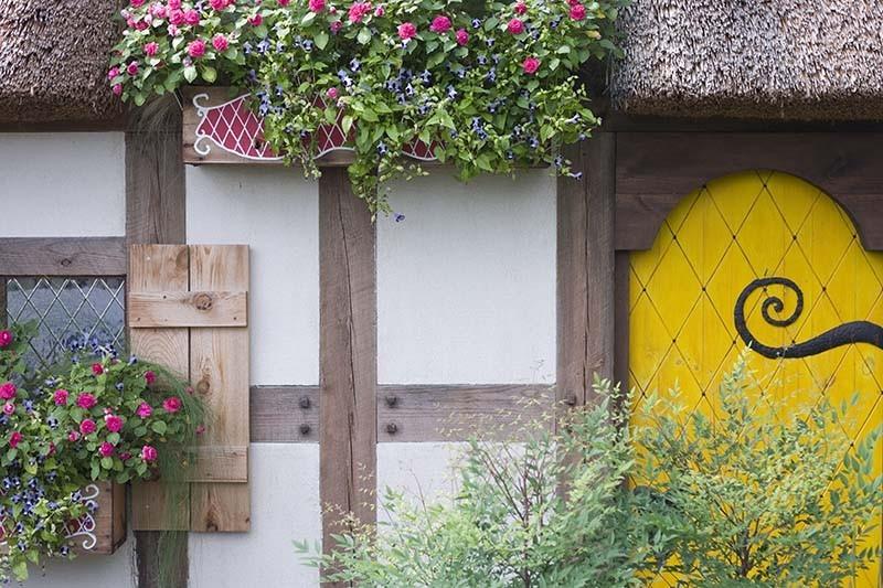 Cottage door and plants