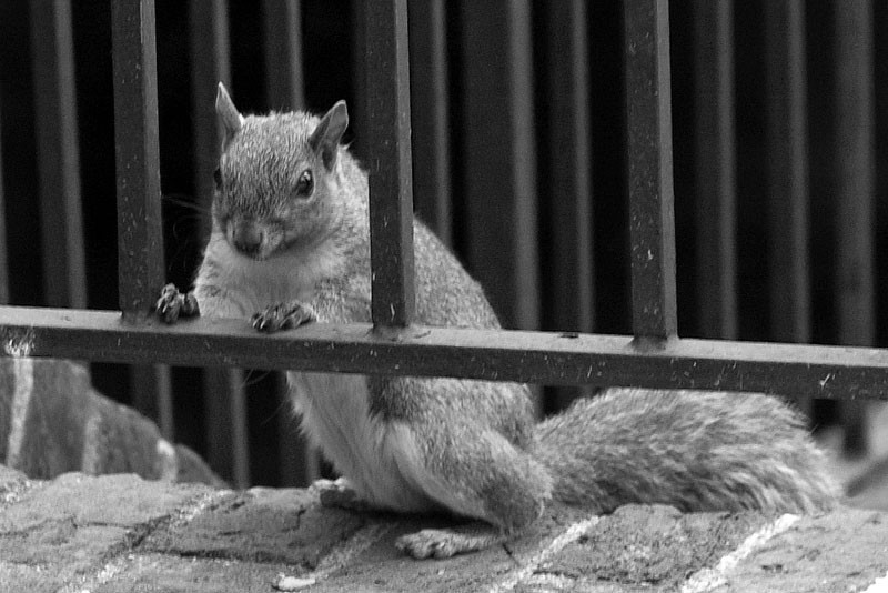 Squirrel prison