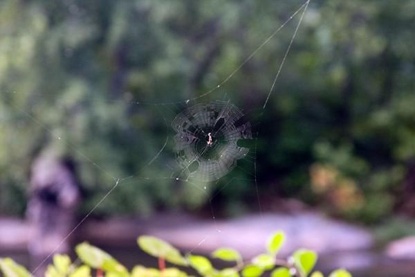 Riverside spider web