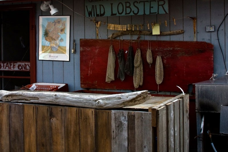 Wild lobsters