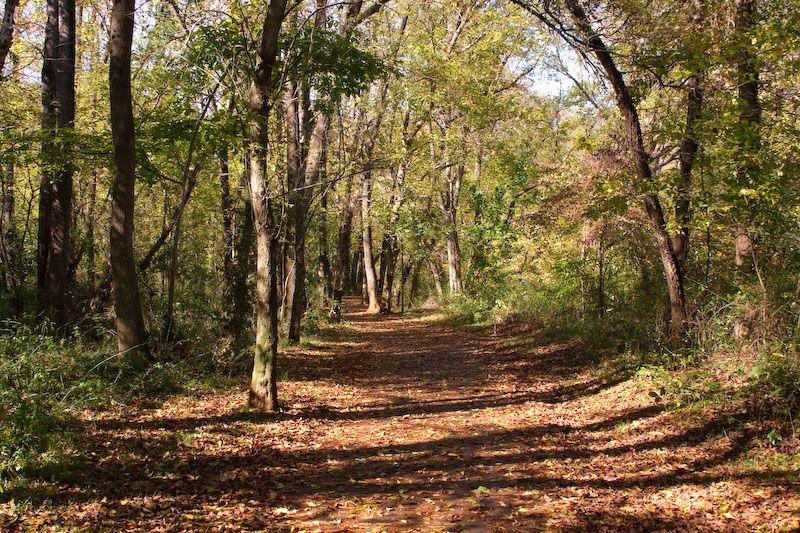 Leaf-covered path