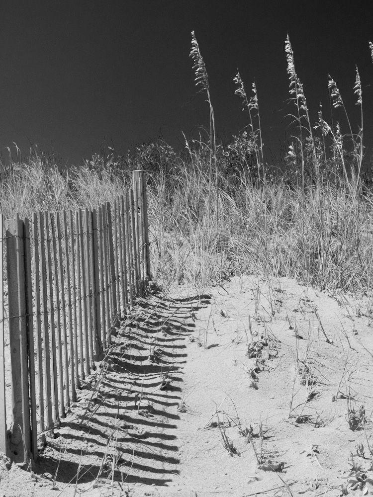 Fence and sea oats