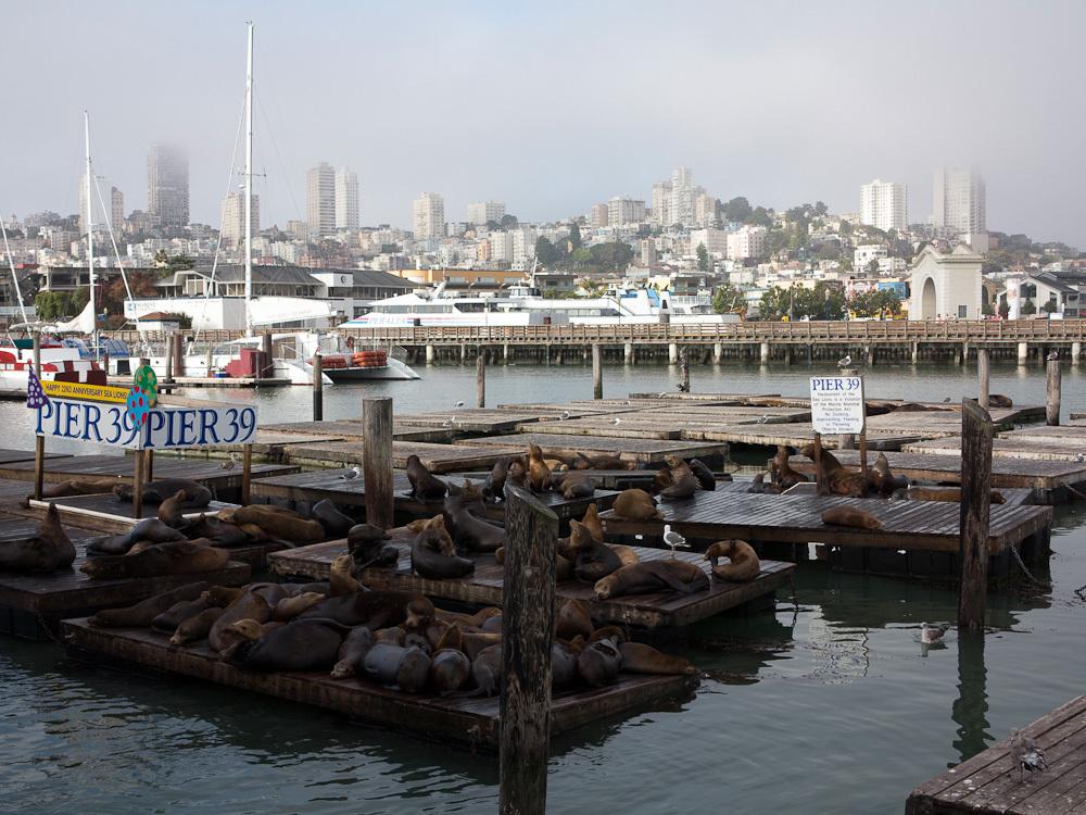 Sea Lions, San Francisco