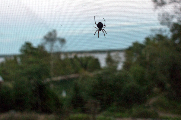 Spider and screen