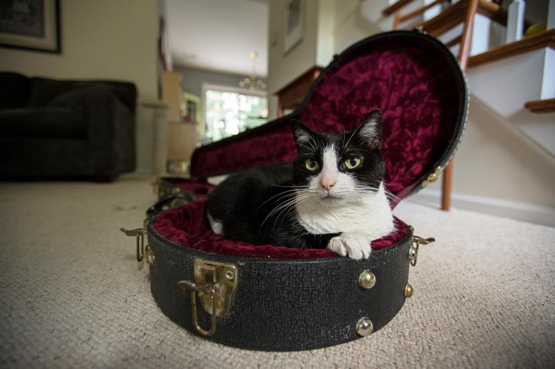Cat in a banjo case