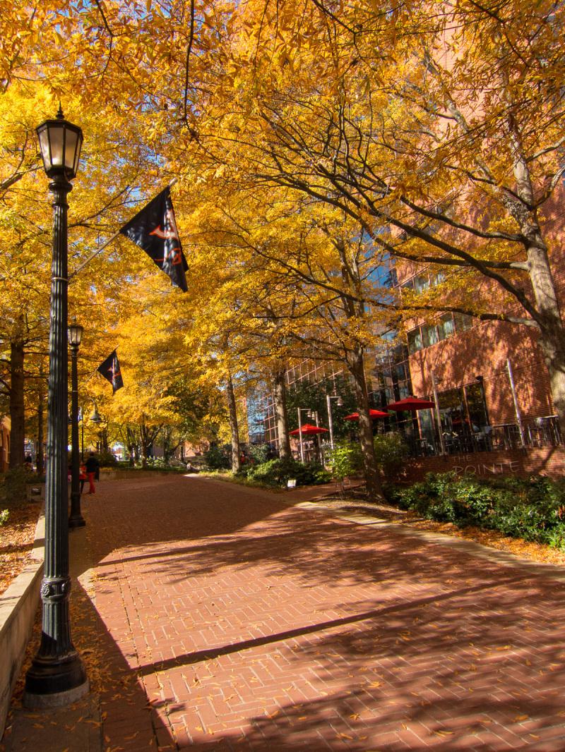 UVA flags, Fall