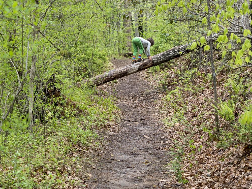 Climbing a log