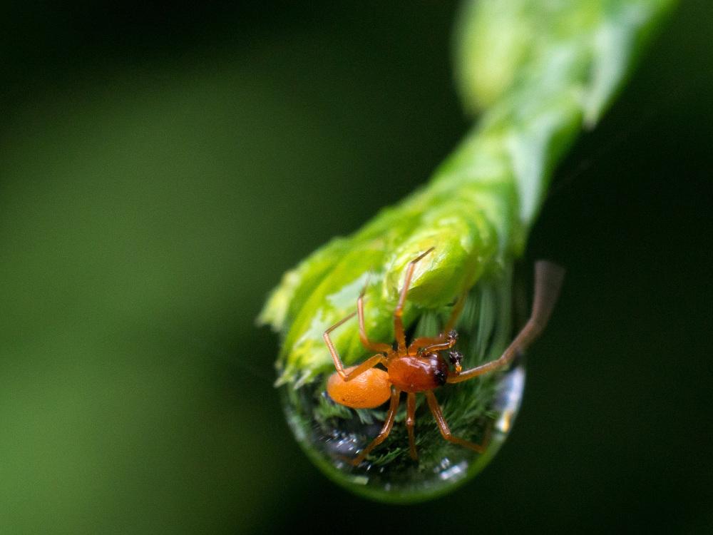 Tiny little spider