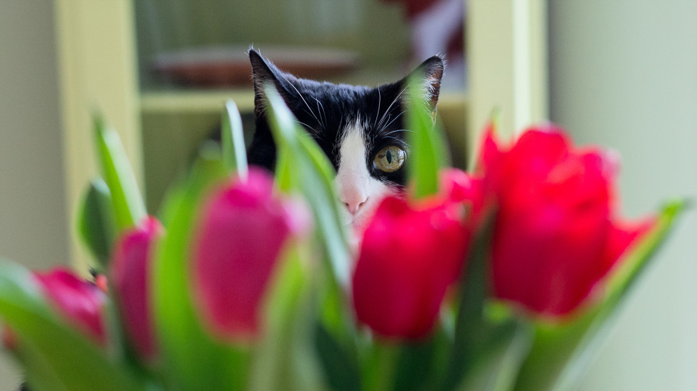Peering through the flowers