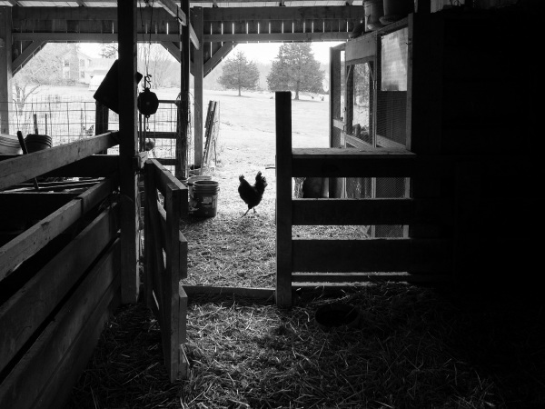 Looking out of the barn