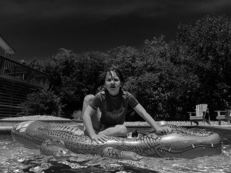 On the alligator