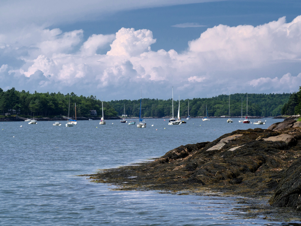 Sailboats, Sheepscot River, ME