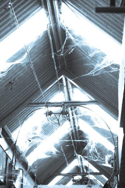 cobwebbed